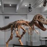 Un tiranosaurio asiático vendido en EEUU en 1.05 MD y regresado a Mongolia