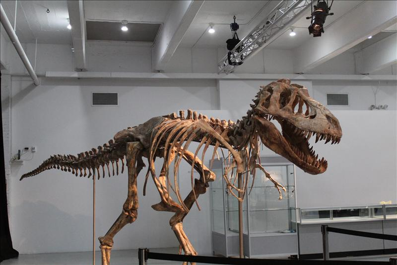 Tiranosaurio bataar- EFE (archivo)