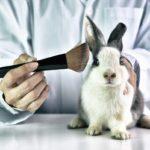 La Unión Europea prohíbe experimentar con animales, para fines cosméticos