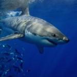 Brasil prohibe la pesca de tiburones y rayas, por estar en peligro de extinción