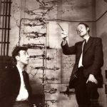 Watson y Crick, ADN 1953