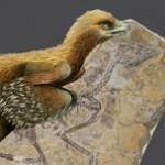 """El """"pájaro del amanecer"""" ilumina la historia de los dinosaurios con plumas"""