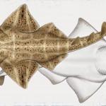 409 millones de años tiene el tiburón más antiguo encontrado; su localización se divulgó en el 2003