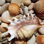 Florentino Azpeitia, un naturalista que hizo una colección de 80,000 conchas de moluscos