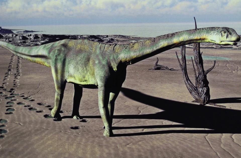 Turiasaurus reiodevensis, dinosaurio