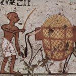 Probablemente los reyes egipcios se trasladaban en burros y no en literas