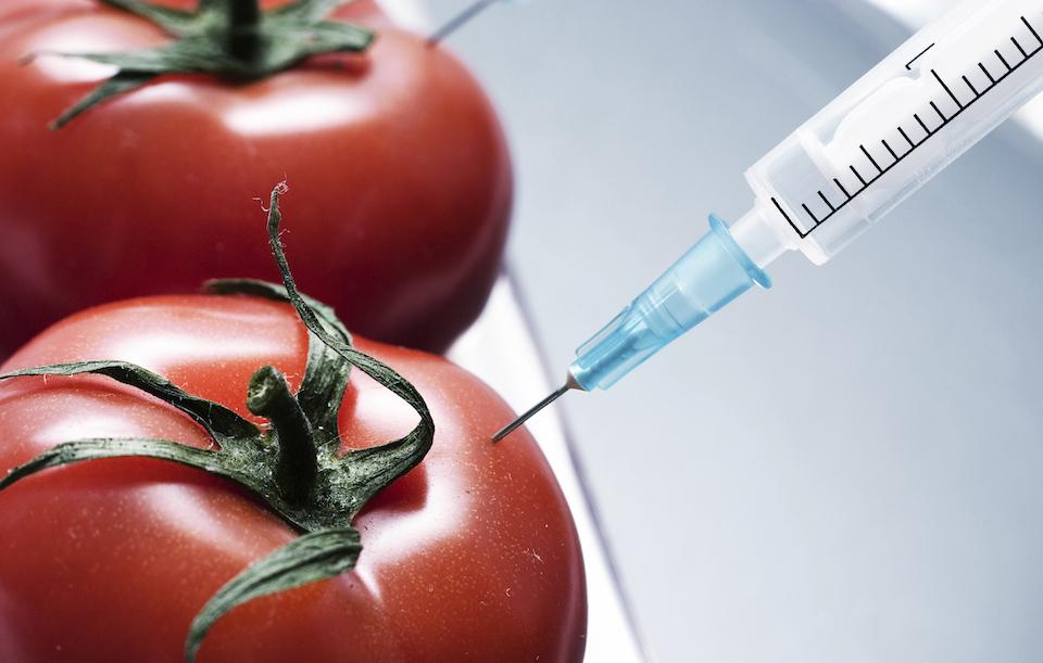 El 19 de mayo de 1994 se inaugura la era de los alimentos transgénicos; ponen a la venta tomates modificados