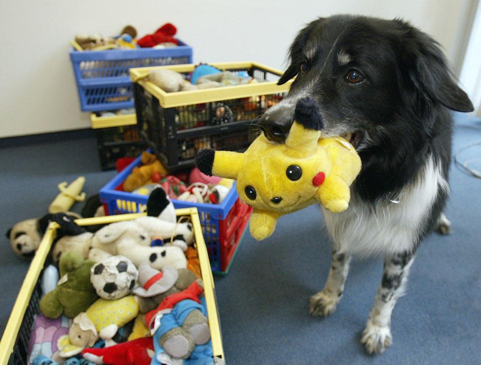 Rico, un perro que aprendió más de 200 palabras... y por descarte