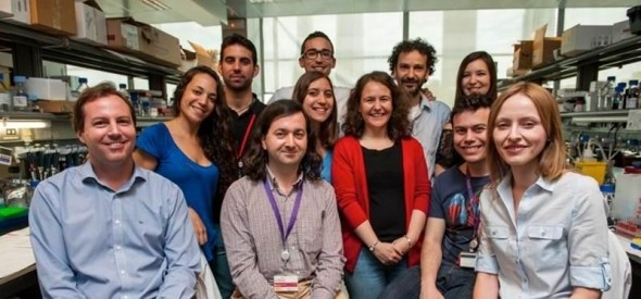 En la imagen puede verse al grupo de investigación liderado por Simón Méndez-Ferrer