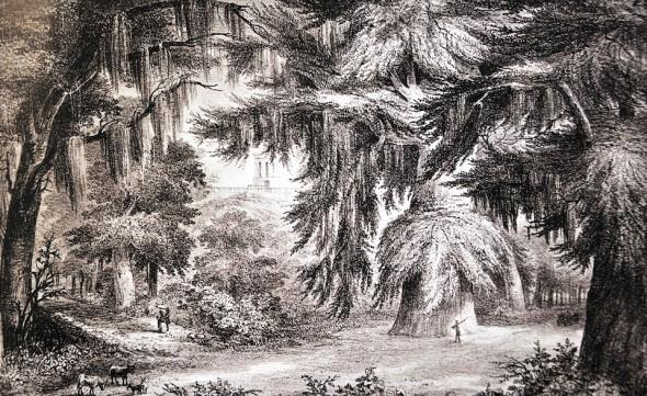 El Bosque de Chapultepec- Casimiro Castro