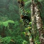 Los bosques tropicales pueden estar absorbiendo más dióxido de carbono de lo calculado