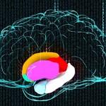 Variaciones genéticas que afectan el cerebro de millones de personas