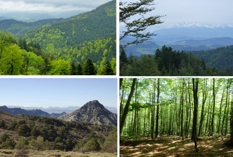 Bosques Mediterráneos- Fernando Valladares