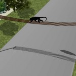 Construirán puentes pasafauna para proteger a las poblaciones de monos, en Argentina.