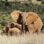 Un dron para salvar a rinocerontes y elefantes de la caza furtiva en África