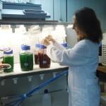 Producir biodésel desecando microalgas.