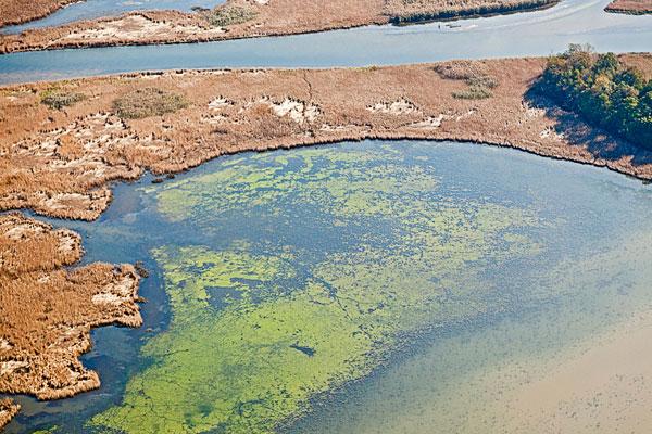 Las zonas muertas se expanden con el calentamiento de las aguas costeras