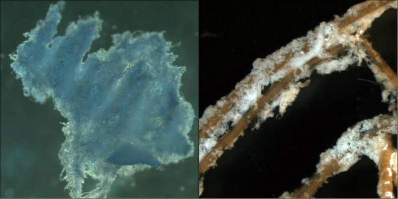Descubierto un nuevo biopolímero parecido a la celulosa