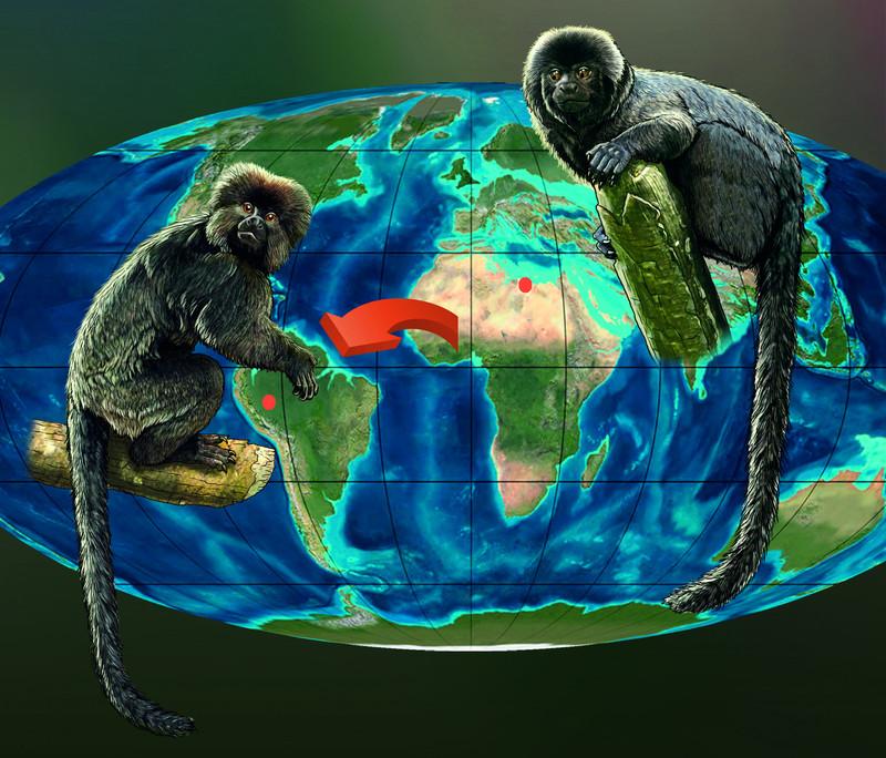 Los primates de América del Sur tienen su origen en África