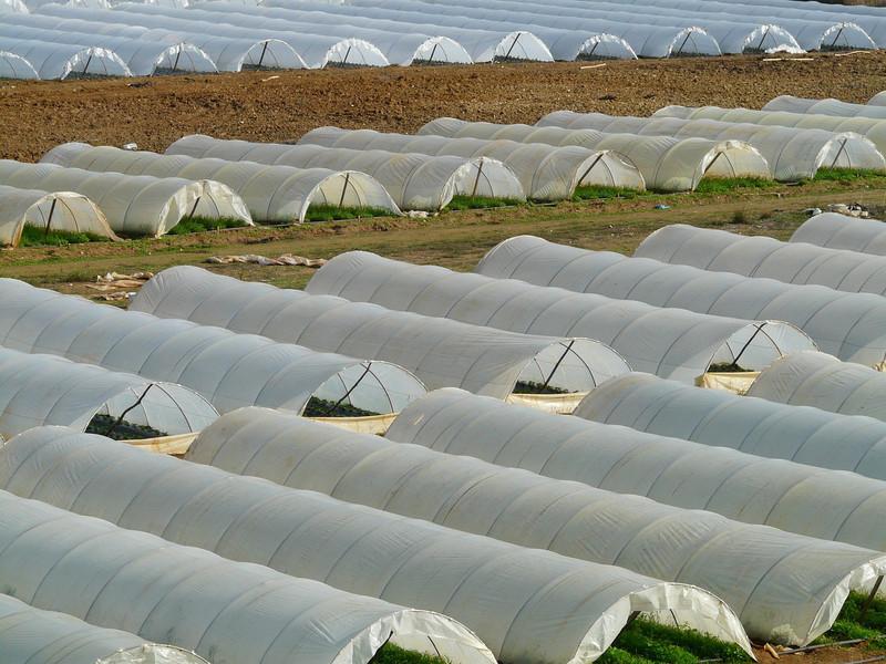 Ecocompuestos, una solución para los residuos plásticos de la agricultura