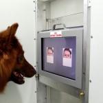 Los perros distinguen si estás contento o enfadado