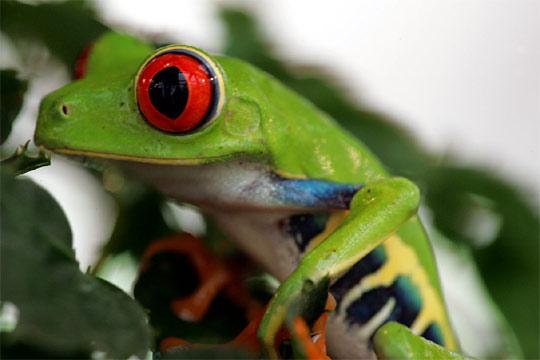 Lagartija de día… rana de noche: Sábados en la Ciencia