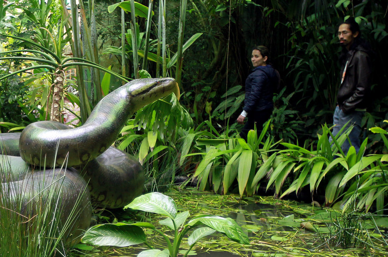 Réplica de boa gigante, Jardín Botánico de Bogota- Mauricio Dueñas Castañeda, EFE