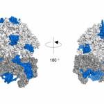Científicos descubren un mecanismo de respuesta celular al estrés oxidativo