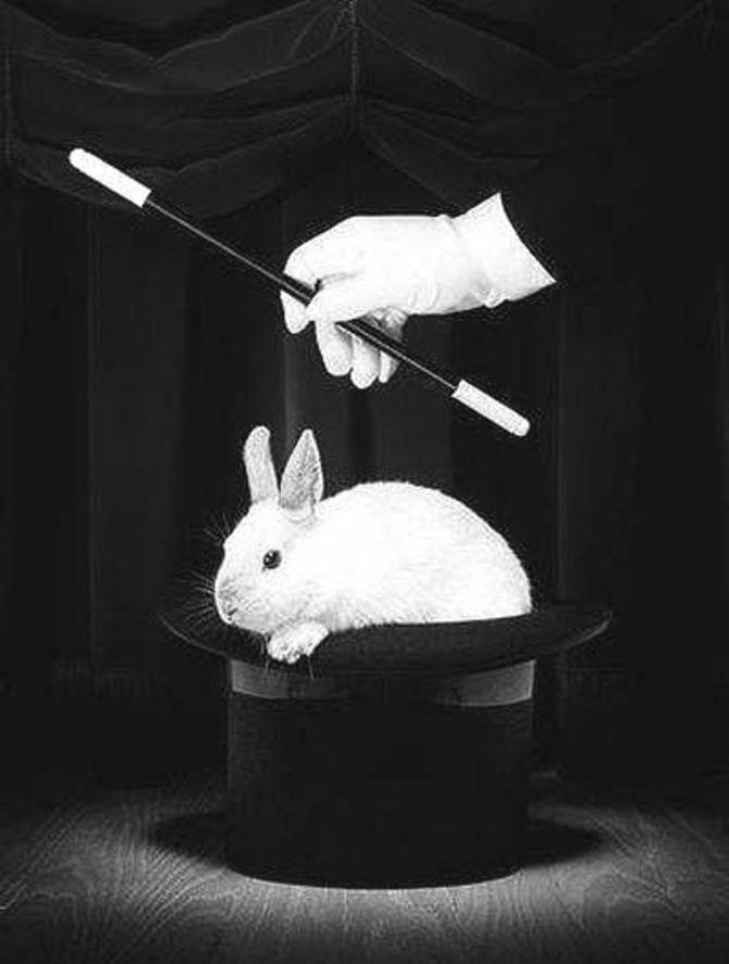 El conejo en el sombrero