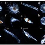 Crean dispositivos para tomar fotos del plancton durante un tifón