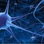 Apagones en la corteza cerebral explican el comportamiento en red de las neuronas