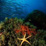 Conservar y aprovechar los recursos del mar profundo, con ciencia básica