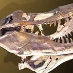¿Qué es un dinosaurio?. Sábados en la Ciencia