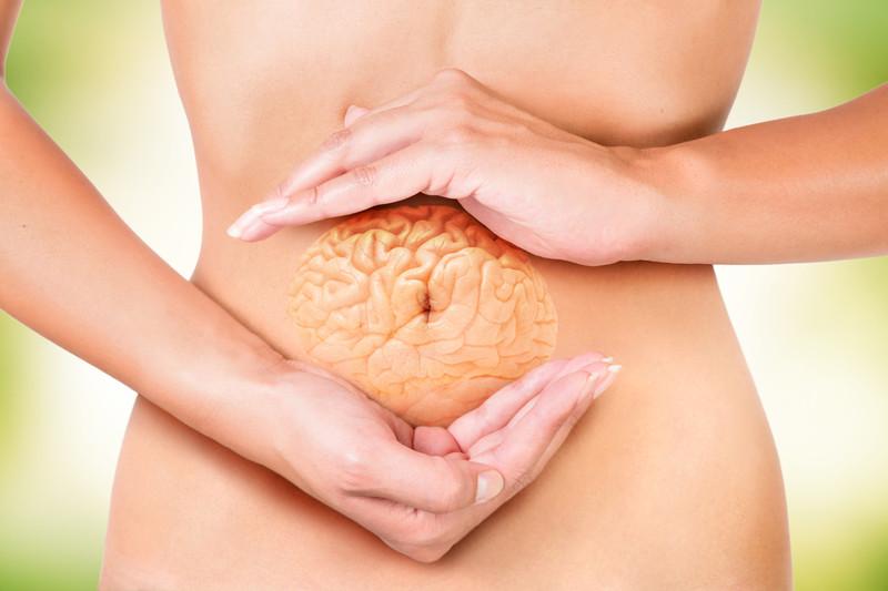 Con el cerebro en las tripas: Las bacterias intestinales podrían cambiar nuestro comportamiento