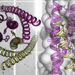 Demuestran la eficacia de una proteína que puede inhibir el virus del VIH-1