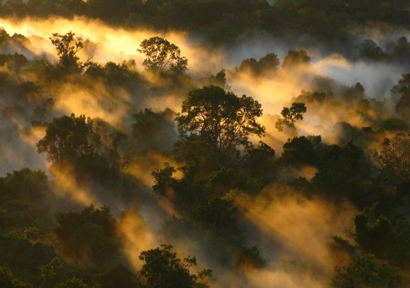 El Amazonas captura menos carbono porque los árboles acortan su vida