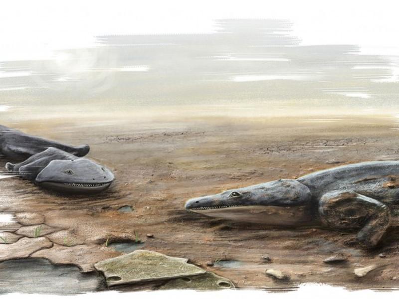 Hallados los fósiles de una especie de salamandra más grande que un humano