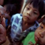 Mal de Chagas, hasta 18 millones infectados en América Latina
