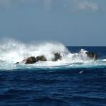 La falta de oxígeno en el océano altera la diversidad animal del fondo marino