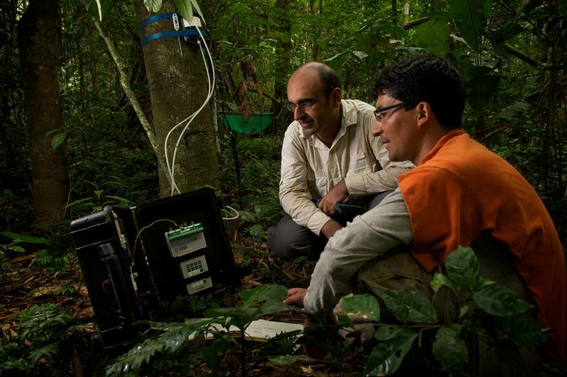 Los bosques amazónicos 'inhalan' un 10% menos de carbono con la sequía