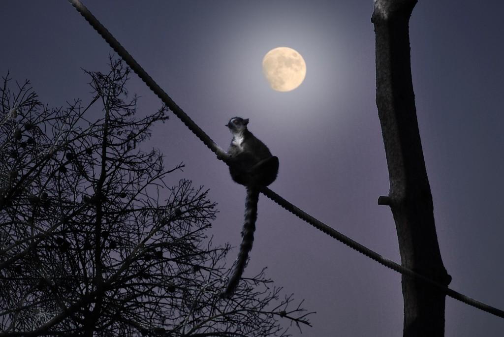 Animales diurnos, nocturnos y crepusculares: Sábados en la Ciencia