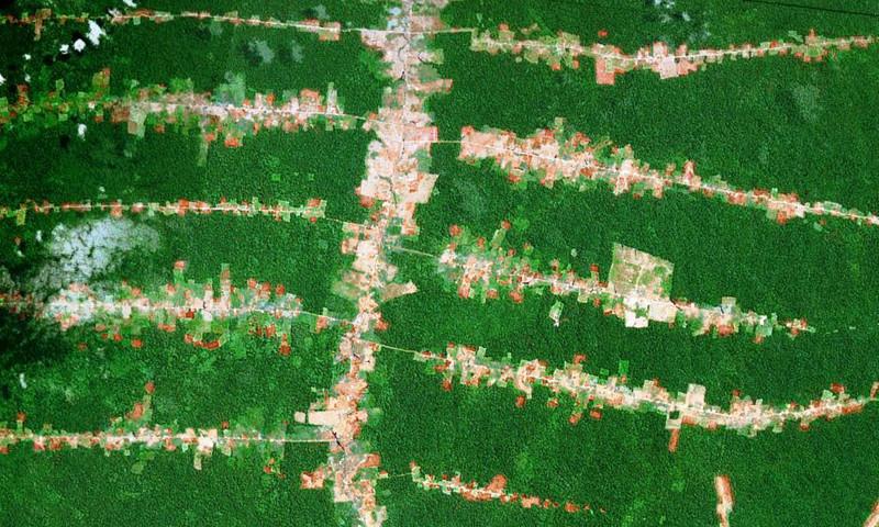 Nueve maneras de frenar la deforestación causada por las construcciones humanas