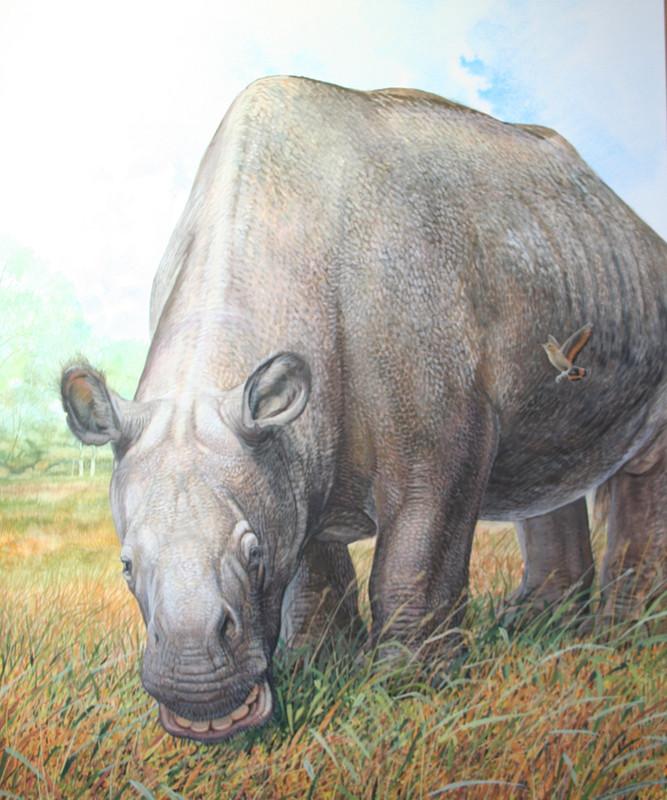 Proteínas antiguas desvelan la historia evolutiva de dos mamíferos sudamericanos