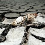 La ciencia desde el Macuiltépetl: El agua, ¿al mejor postor?