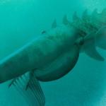 Un extraño crustáceo gigante de hace 480 millones de años