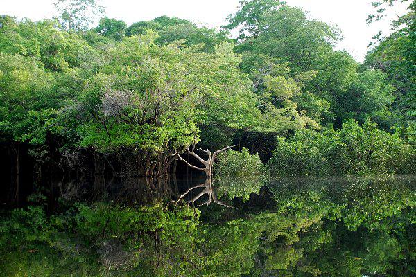En los ecosistemas complejos, como las selvas amazónicas, coexisten muchas especies similares entre sí