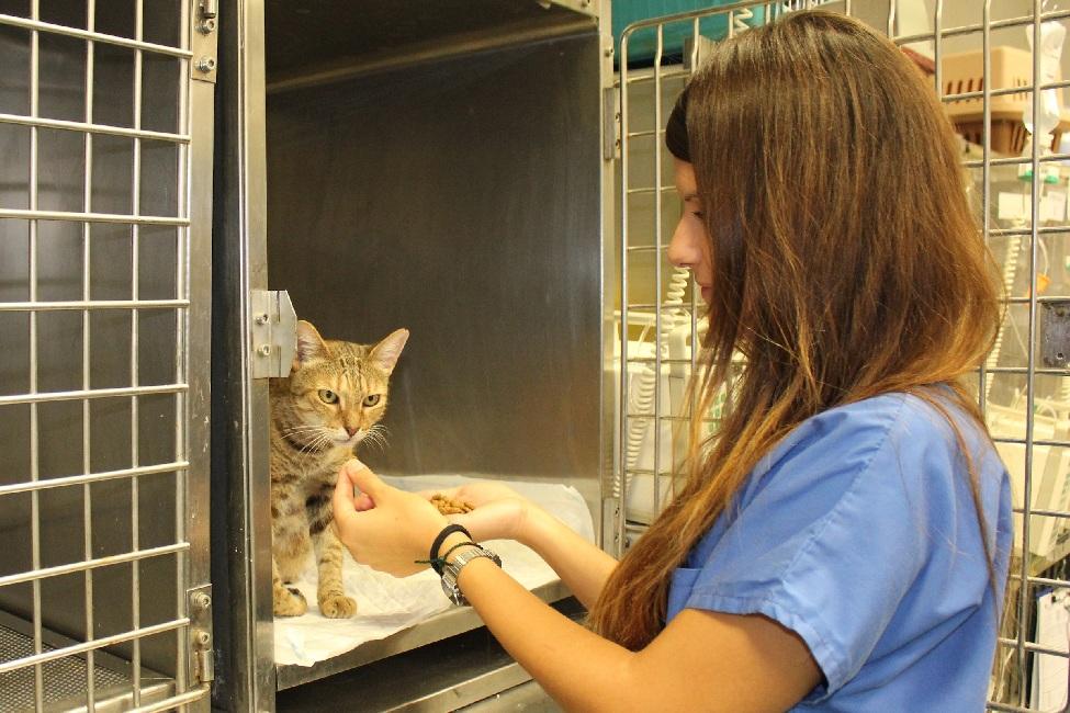 Nueva herramienta para medir el dolor postoperatorio de los gatos.