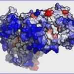 Un nuevo método en 3D mejora el estudio de las proteínas