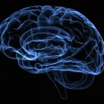 ¿Porqué el cerebro es tan sensible a la falta de oxígeno?