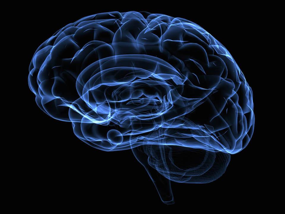 La obesidad alcanza al cerebro